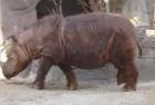 Hewan langka dari Pulau Sumatera
