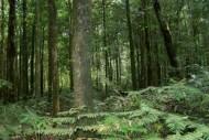 Hutan Menuju Air Terjun Dua Warna Sibolangit