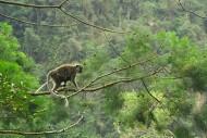 Monyet Ekor Panjang, Lembah Harau