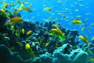 Penghuni Bawah Laut Taman Laut Rubiah