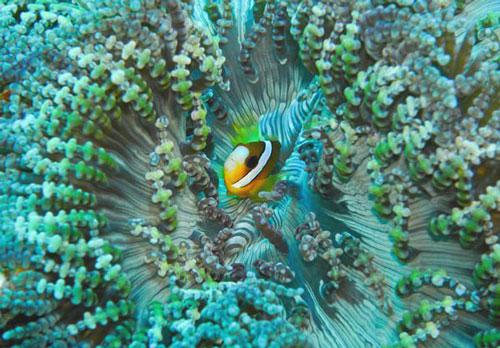Pesona Taman Wisata Alam Laut Pulau Weh